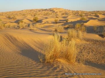 ultra trail 100km del sahara 2014 fotos mayayo (52)
