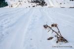 139-ski de montaña skimarathon 2015-4591